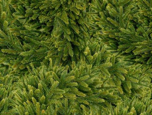 Δωρεάν στοκ φωτογραφιών με εργοστάσιο, πράσινος, σκούρα πράσινα φυτά, σκούρο πράσινο