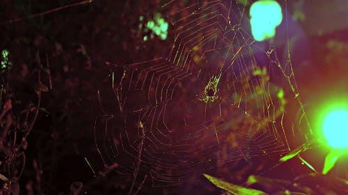 Free stock photo of halloween, nature, nature life