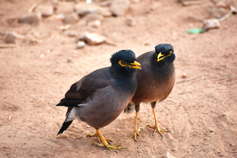 μεγάλο πουλί κινητού Horny Λεσβίες μαμάδες