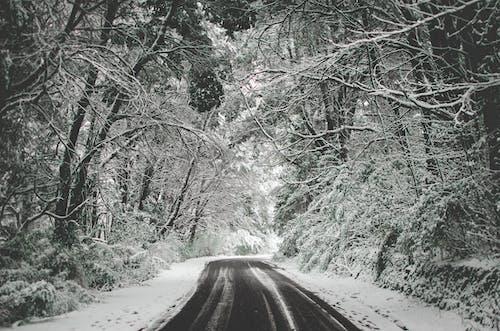 Бесплатное стоковое фото с ветви, деревья, дорога, живописный