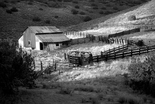 Ingyenes stockfotó farm, fekete-fehér, fű, istálló témában