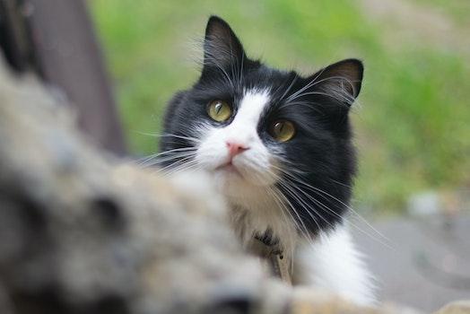 Free stock photo of animal, pet, cute, kitten