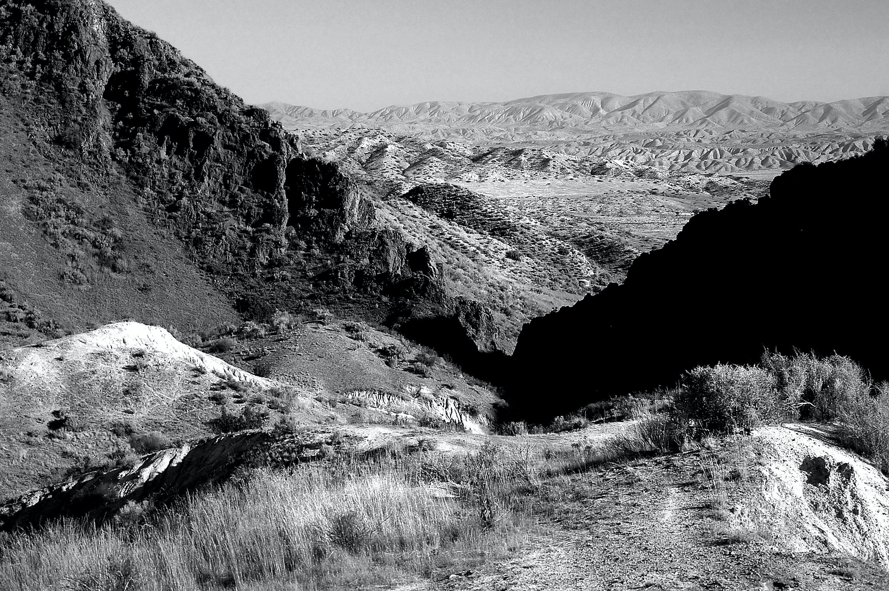 คลังภาพถ่ายฟรี ของ ขาวดำ, ถนน, ธรรมชาติ, พุ่มไม้