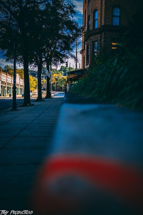 คลังภาพถ่ายฟรี ของ การถ่ายภาพในเมือง, ข้าม, ตกรู้สึก, ต้นไม้