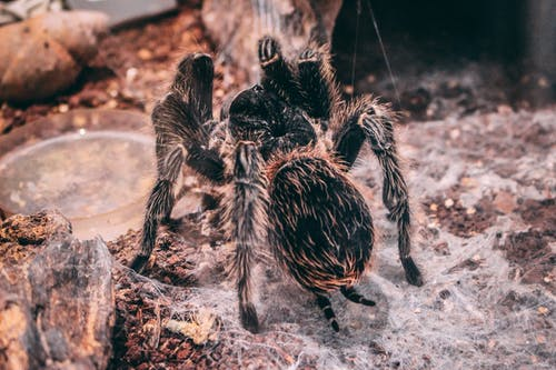 Free stock photo of adventure, america, animal, arachnid