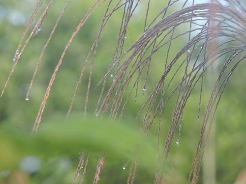 Foto d'estoc gratuïta de bông lau