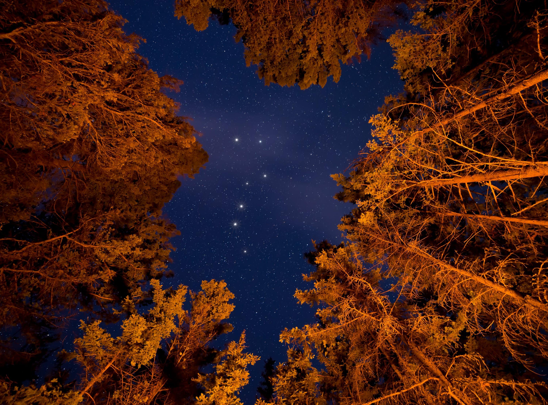 Foto d'estoc gratuïta de arbres, bosc, boscos, camperols