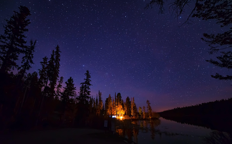 Pine Trees Under Starry Night Sky