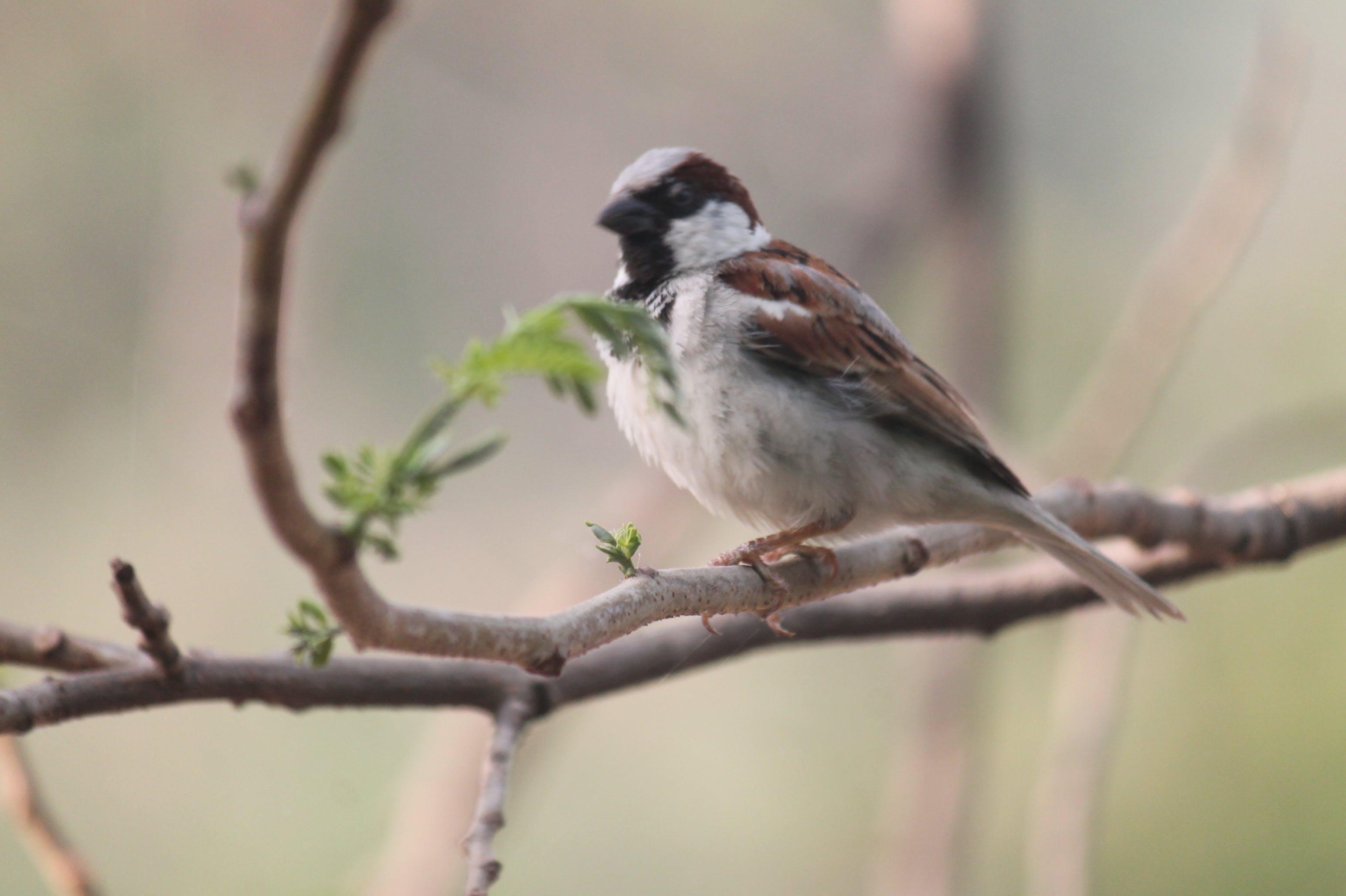 Kostenloses Stock Foto zu spatz, vögel beobachten