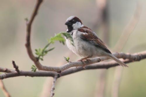 Free stock photo of bird watching, sparrow