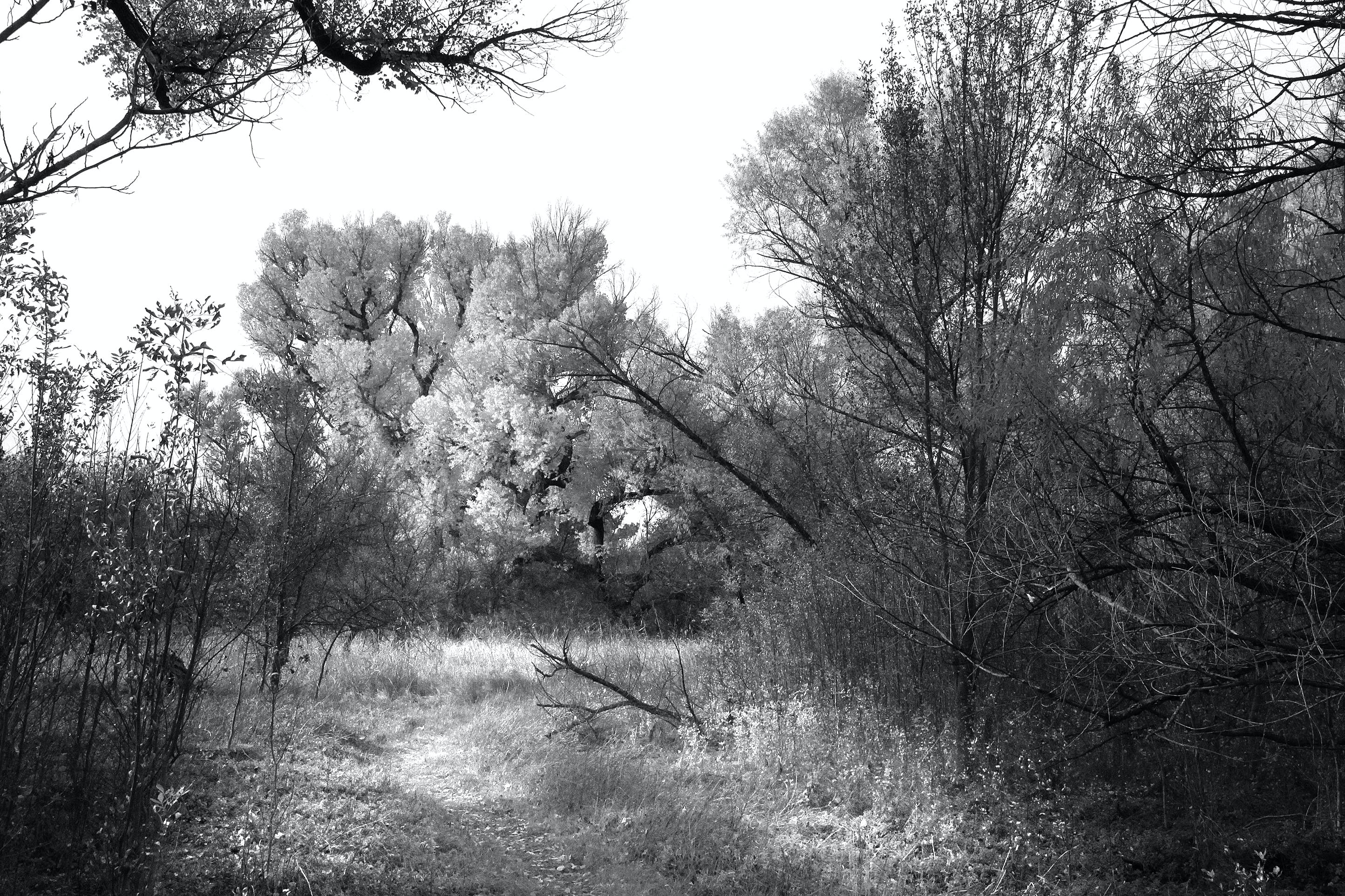 Grayscale Photo of Trees in the Woods