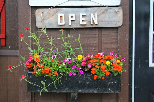 Free stock photo of building, colorful, flowers, open sign