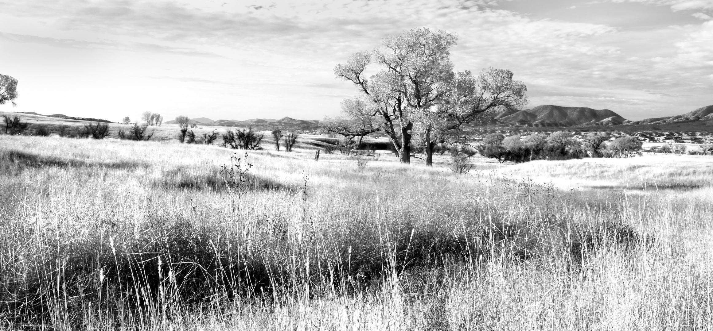 フィールド, 白黒, 絶景, 自然の無料の写真素材