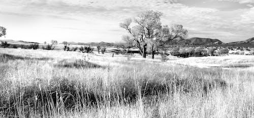 天性, 景觀, 樹, 田 的 免費圖庫相片