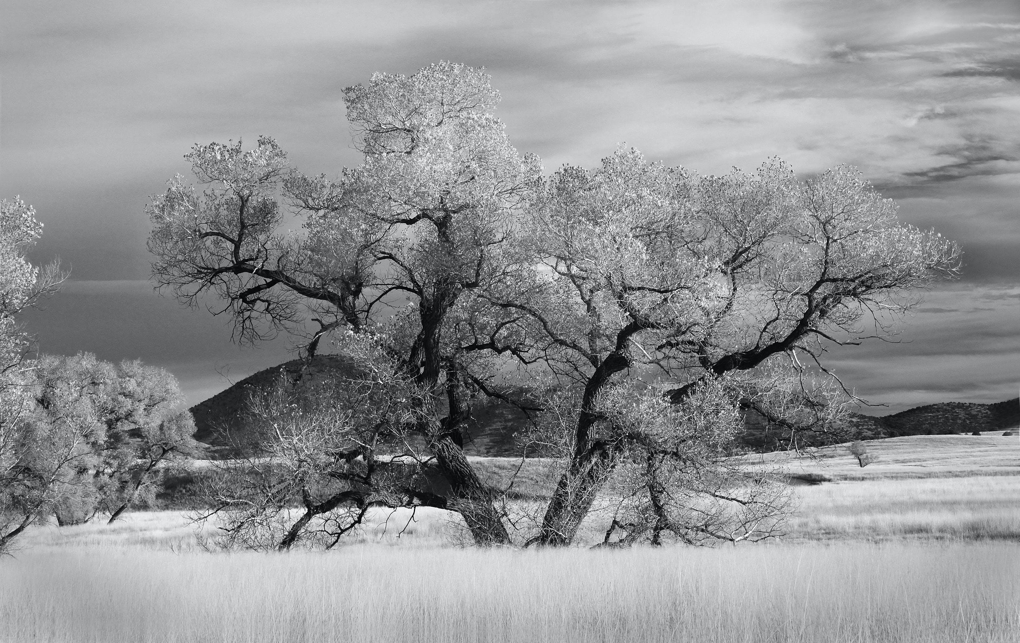 Graysclae of Tree Near Grass