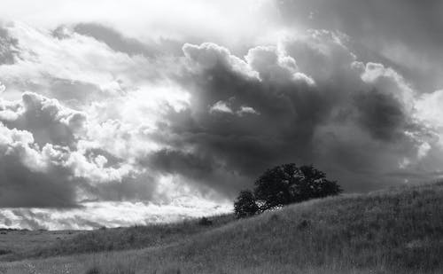 Greyscale Photo of a Tree Under Cloudy Sky at Daytime