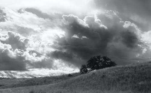 Foto stok gratis angin ribut, bidang, cuaca, hujan