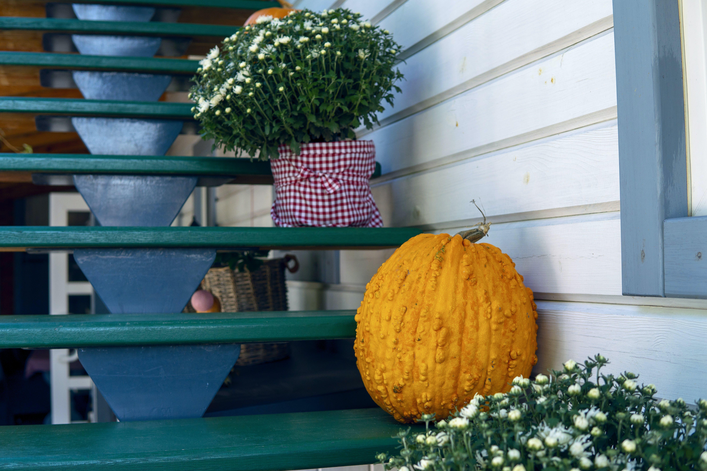 Orange Squash on Green Wooden Stairs