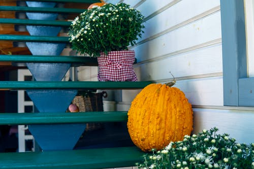 Orange Squash on Green Wooden Stairs