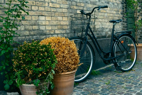 Black Commuters Bike Near to Plant Pots