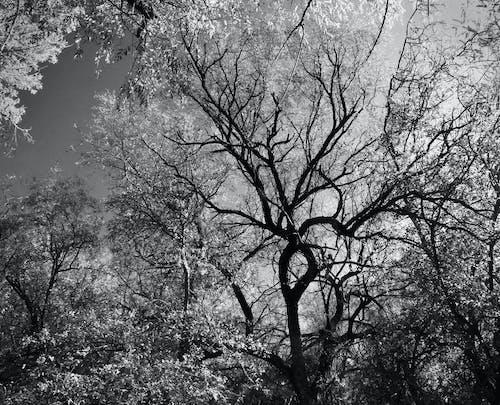 Kostnadsfri bild av gren, miljö, naturskön, svartvit