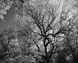 black-and-white, trees, trunk