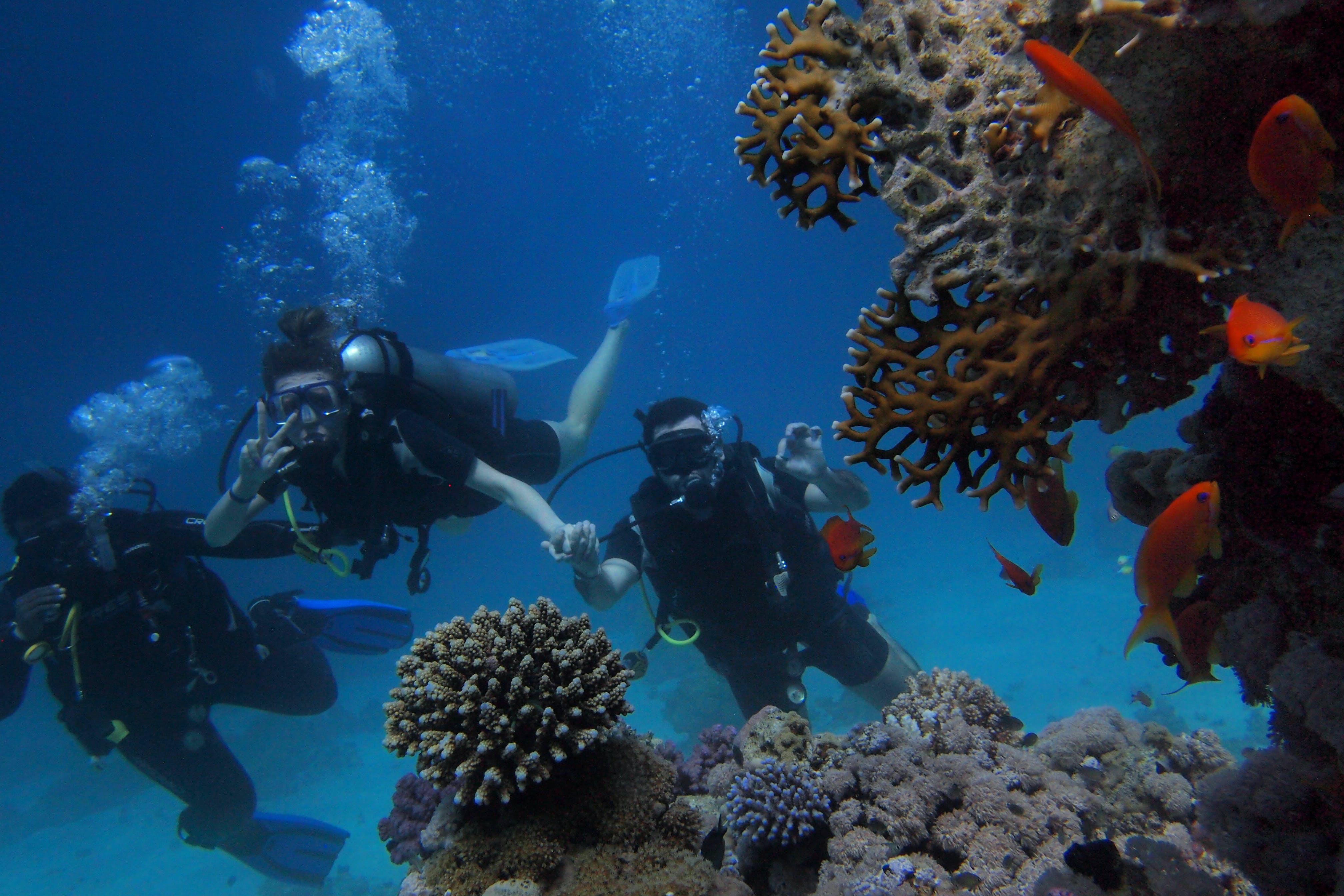dalgıçlar, dalış, deniz, derin içeren Ücretsiz stok fotoğraf