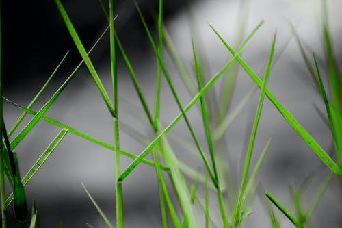 Ingyenes stockfotó fűszál, háttér, legelő, sötétzöld témában