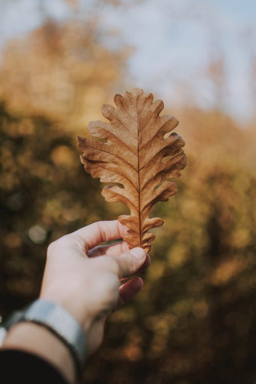 Selective Focus Photography of Person Holding Beige Leaf