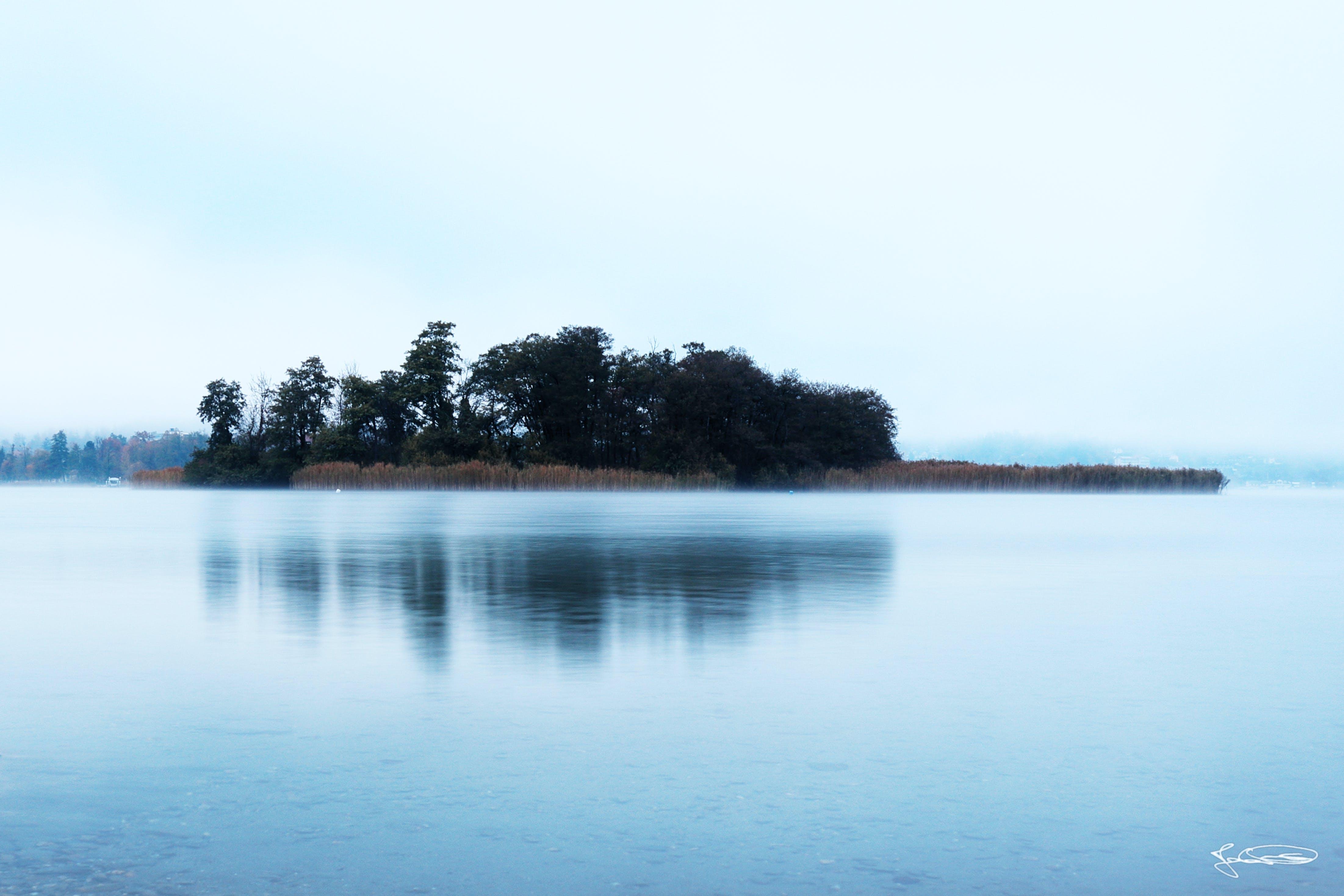Fotos de stock gratuitas de agua, arboles, bosque, con neblina