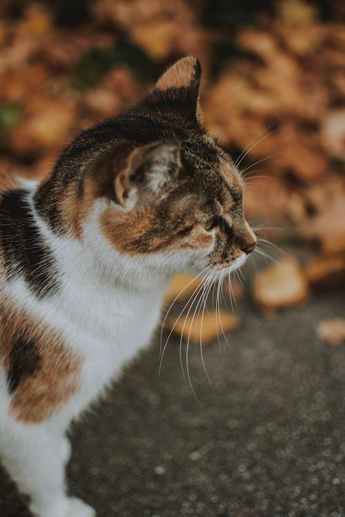 Foto stok gratis binatang, bulu, cute, domestik