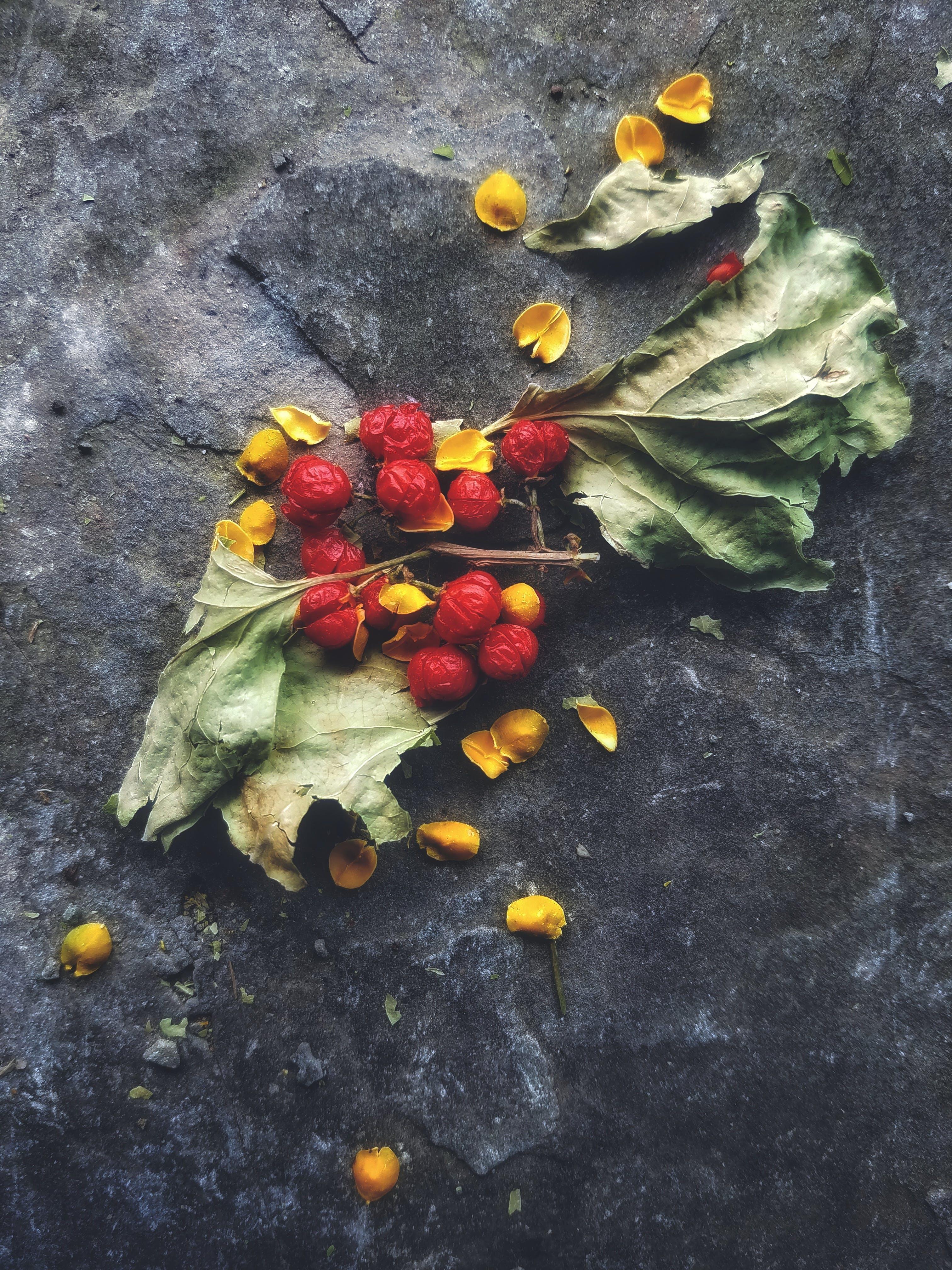 Kostenloses Stock Foto zu blätter, frucht, trockene blätter