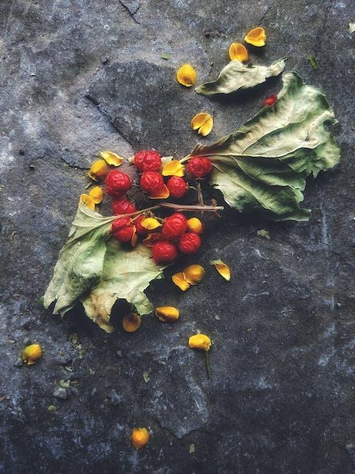 kuru yapraklar, meyve içeren Ücretsiz stok fotoğraf