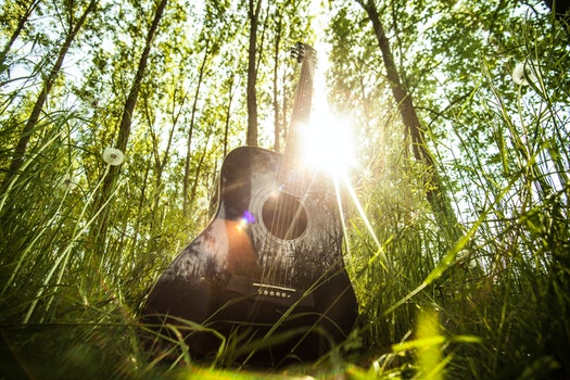 Free stock photo of forest, trees, grass, ray of sunshine