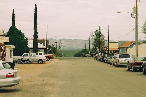 Fotos de stock gratuitas de arboles, asfalto, calle, carretera