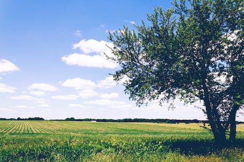 건초지, 경치, 계절, 구름의 무료 스톡 사진