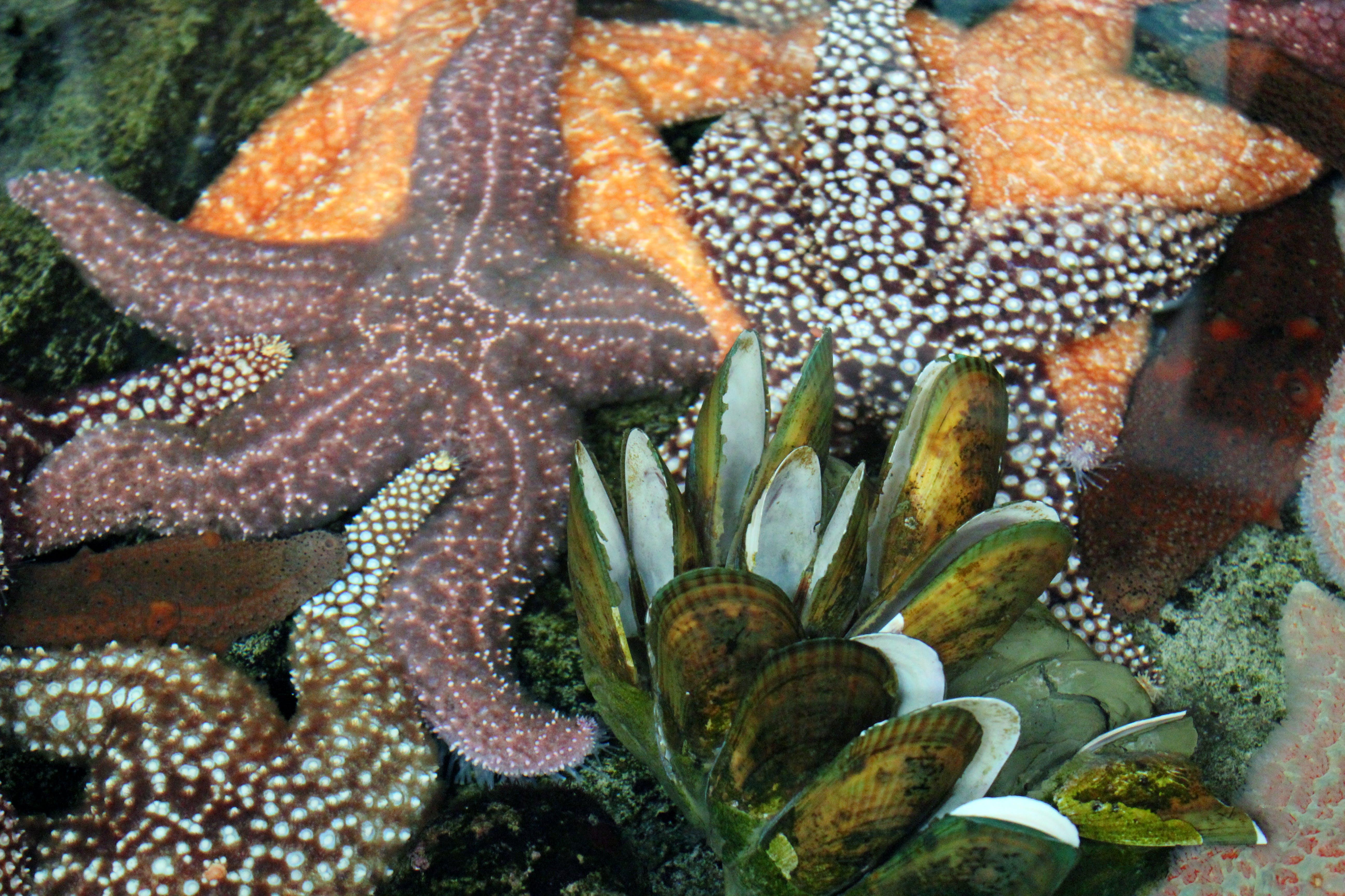 Free stock photo of starfish
