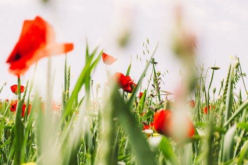 Photos gratuites de champ, fleurs, floral, flore
