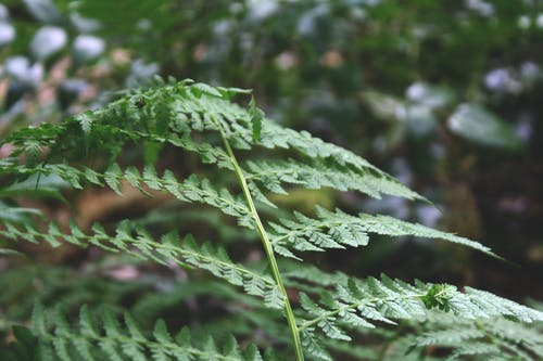 Free stock photo of fern, forest, mountain