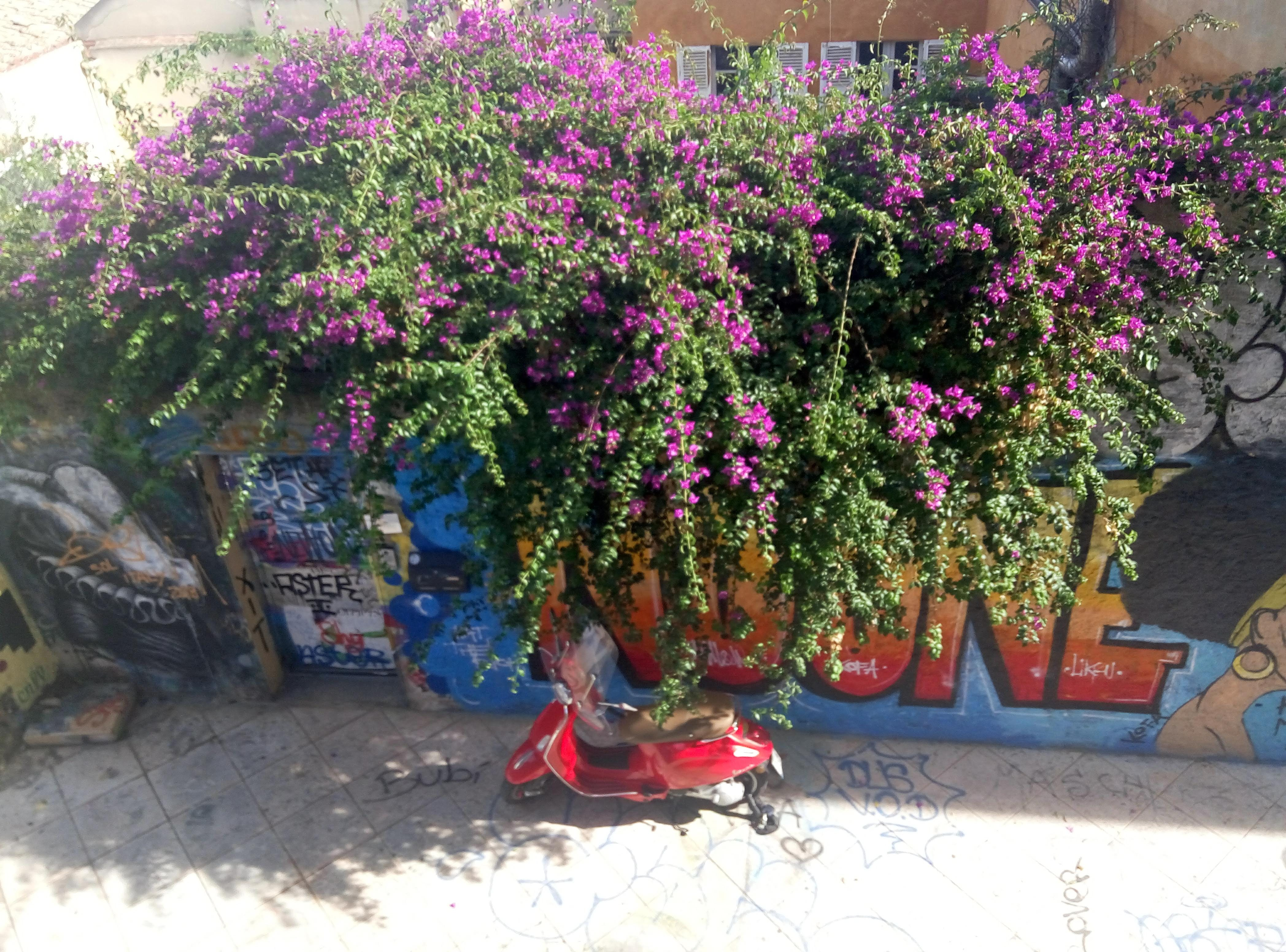 Free stock photo of flowers, motorbike, wall
