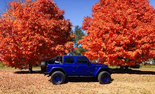Blue Jeep Wrangler Suv Near Orange Leafed Trees
