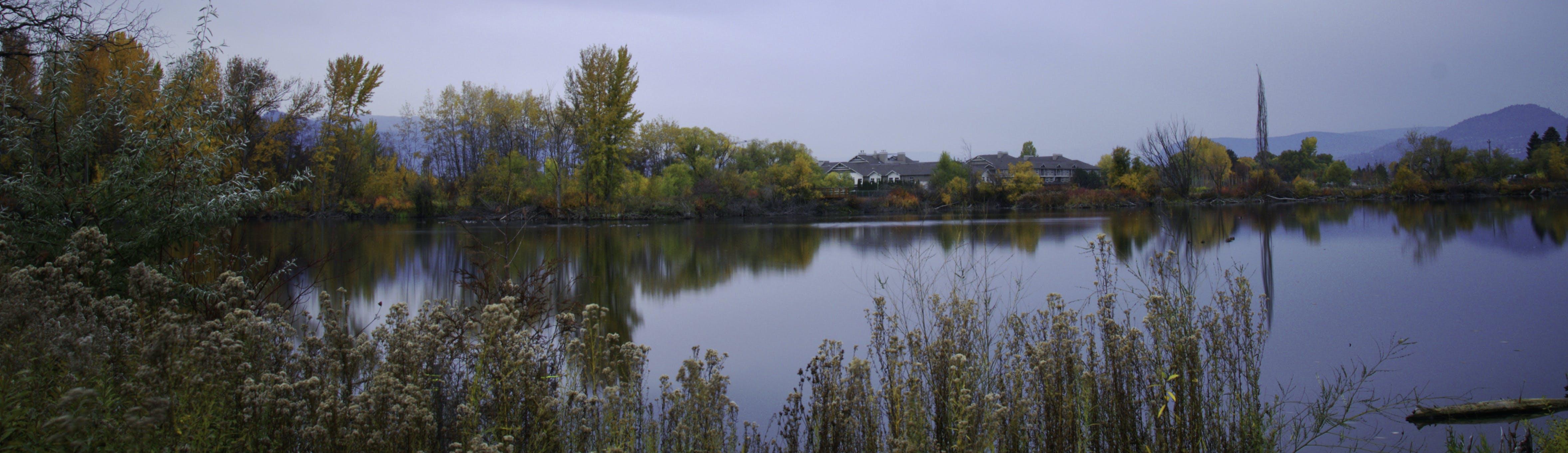 Free stock photo of lake trees brush sky pond fall water colour