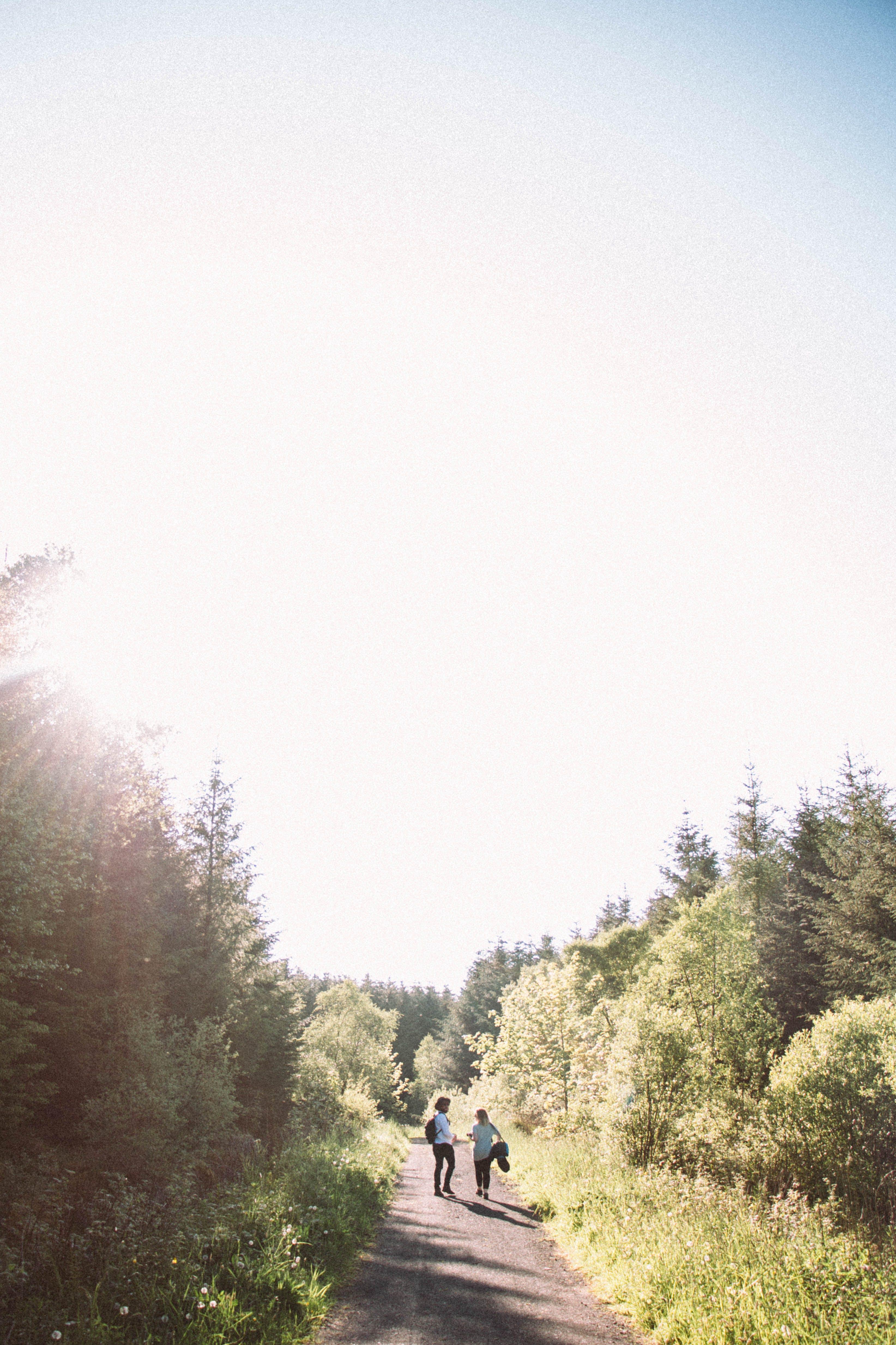 Foto d'estoc gratuïta de arbres, aventura, bosc, estiu