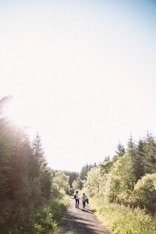 Fotos de stock gratuitas de arboles, aventura, bosque, explorar