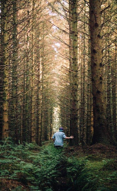 Imagine de stoc gratuită din arbori, arbori veșnic verzi, aventură, codru