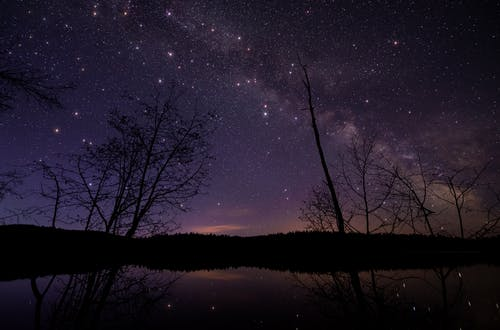 Leafless Trees Under Starry Night Sky