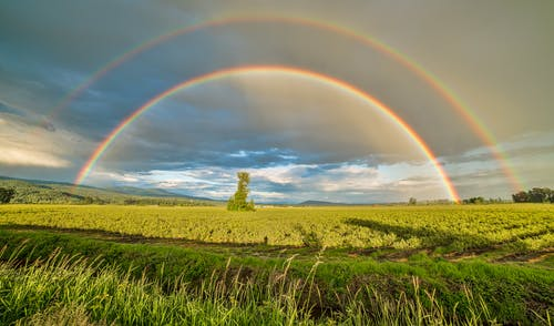 Crop Field Under Rainbow and Cloudy Skies at Dayime