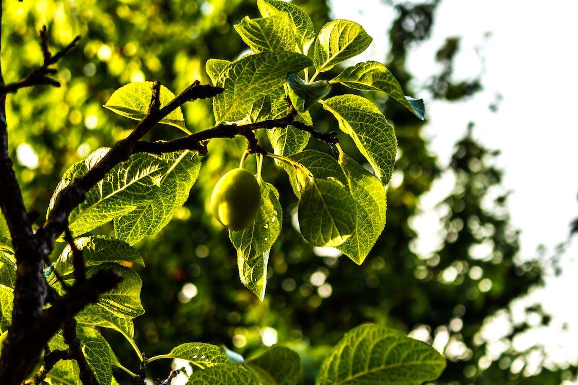 дерево, жизнь, красота