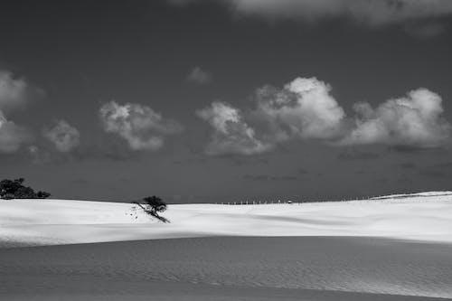 คลังภาพถ่ายฟรี ของ areia, árvore, céu