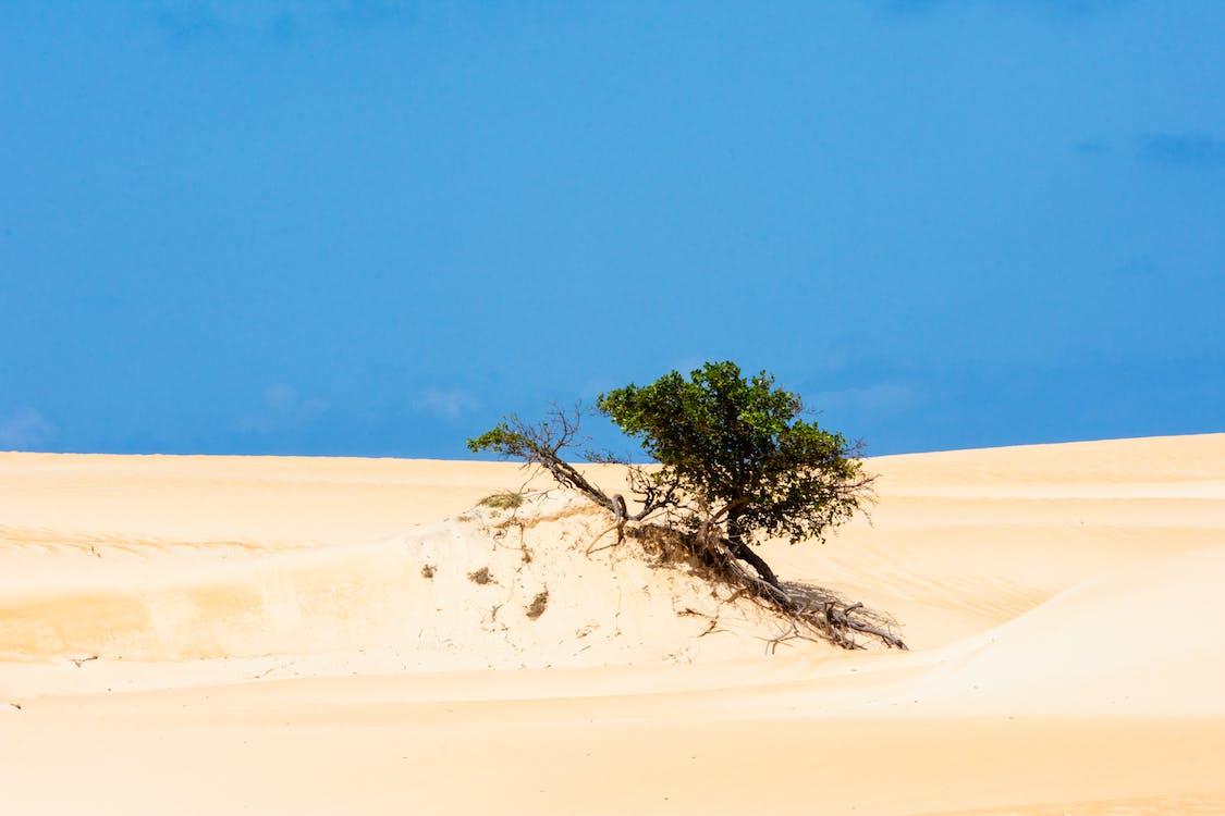 Kostenloses Stock Foto zu baum, blauer himmel, brasil